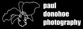Paul Donohoe Photography